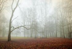 Autumn nature landscape - foggy autumn scene of autumn park in dense fog. Autumn nature - autumn foggy park in dense fog. Autumn foggy landscape scene. Autumn stock photo
