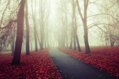 Autumn nature landscape - foggy autumn view of autumn park alley in dense fog Royalty Free Stock Photos