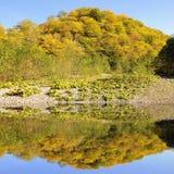 Autumn nature landscape. Royalty Free Stock Photos