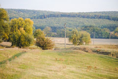 Autumn nature landscape in Moldova Stock Images