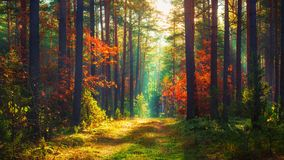 Free Autumn Nature Landscape Of Colorful Forest Stock Photography - 131400332