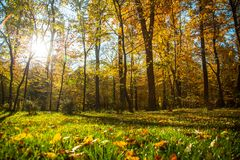 Autumn nature landscape outdoor. Autumn nature landscape outdoor forest. Yellow trees in the park in the sunlight Royalty Free Stock Images