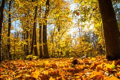 Autumn nature landscape outdoor. Autumn nature landscape outdoor forest. Fallen leaves in the park in the background of sunlight Royalty Free Stock Image