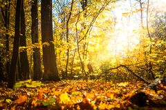 Autumn nature landscape outdoor. Autumn nature landscape outdoor forest. Fallen leaves in the park in the background of sunlight Stock Photos