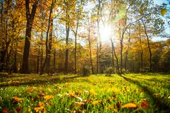 Autumn nature landscape outdoor. Autumn nature landscape outdoor forest. Fallen leaves in the park in the background of sunlight Royalty Free Stock Photography