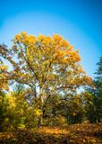 Autumn nature landscape outdoor. Autumn nature landscape outdoor forest. Fallen leaves and yellow trees Stock Image