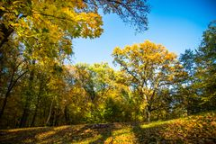 Autumn nature landscape outdoor. Autumn nature landscape outdoor forest. Fallen leaves and yellow trees Royalty Free Stock Image