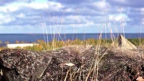 Autumn nature landscape stock video footage