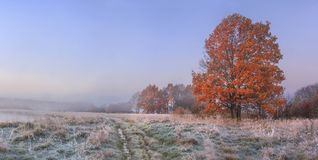Free Autumn Nature Landscape With Clear Sky And Colored Tree. Cold Meadow With Hoarfrost On Grass In November Morning Royalty Free Stock Photos - 122337678