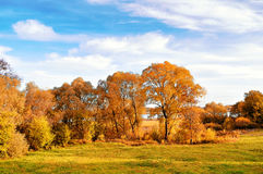 Autumn nature landscape-yellowed autumn trees in autumn sunny weather. Sunset autumn view of autumn trees lit by sunlight. Picturesque autumn view of autumn Royalty Free Stock Photo