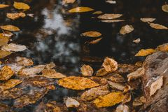 Autumn nature leaves yellow 2g royalty free stock photography