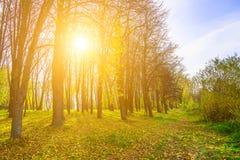 Autumn Nature mit Sun, der durch Baumaste scheint Lizenzfreies Stockfoto