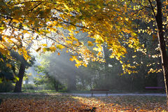 Autumn nature in the morning Stock Images