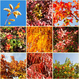 Autumn nature palette. Collage. Stock Images