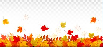 Autumn nature panorama with colorful leaves. royalty free illustration