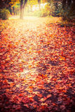 Autumn nature park or forest background with colorful fallen leaves, outdoor fall Stock Photos