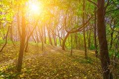 Autumn Nature parkerar in Fotografering för Bildbyråer