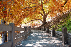 Autumn nature path Stock Photos