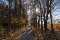 Autumn Nature and Path With Autumn Leaves royalty free stock image
