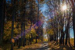 Autumn Nature and Path With Autumn Leaves stock photos