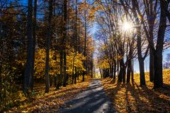 Autumn Nature and Path With Autumn Leaves stock images