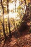 Autumn nature Royalty Free Stock Photos
