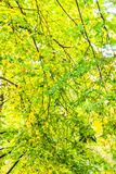 Autumn nature scene background, leaves and trees outdoors. Fall beauty, weather and seasons concept - Autumn nature scene background, leaves and trees outdoors royalty free stock image