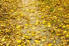 Autumn nature scene background, leaves and trees outdoors. Fall beauty, weather and seasons concept - Autumn nature scene background, leaves and trees outdoors royalty free stock photography