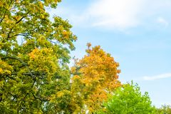Autumn nature scene background, leaves and trees outdoors. Fall beauty, weather and seasons concept - Autumn nature scene background, leaves and trees outdoors royalty free stock photo