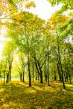 Autumn nature scene background, leaves and trees outdoors. Fall beauty, weather and seasons concept - Autumn nature scene background, leaves and trees outdoors stock images
