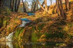 Autumn Nature Scenery Image stock