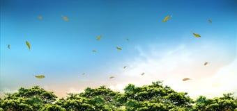 Autumn Nature Sky bild Royaltyfri Bild