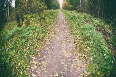 Autumn nature. Trail in fall forest Royalty Free Stock Image