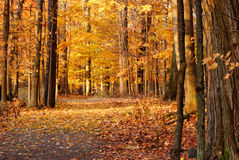 Autumn Nature Trail. In the northeast state of New York Royalty Free Stock Photography