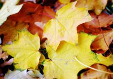 Autumn nature: yellow fallen leaves in the park Stock Photos