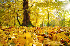 Autumn nature Royalty Free Stock Images