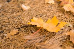 Autumn nature. Yellow leaves on the grass royalty free stock photography