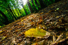 Autumn is near. Yellow leaf in summer wood Stock Photography