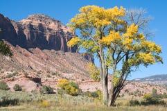 Autumn near Gateway. Fall tree and sandstone butte near Gateway, Colorado Stock Photos