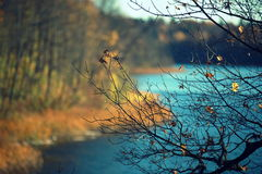 Autumn near lake. Beautiful landscape of autumnal forest near lake. Autumnal colorful trees. Taken near Dubingiai. Lake Asveja Royalty Free Stock Photography