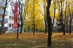 Autumn in neigborhood royalty free stock photography