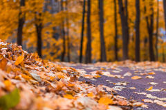 The autumn in the Neskuchny Garden. Autumn 2013. Russia. Moscow. Neskuchny Garden in the evening Stock Photography