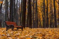 The autumn in the Neskuchny Garden. Autumn 2013. Russia. Moscow. Neskuchny Garden in the evening Stock Image
