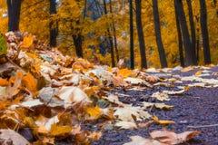 The autumn in the Neskuchny Garden. Autumn 2013. Russia. Moscow. Neskuchny Garden in the evening Royalty Free Stock Photo
