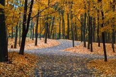 The autumn in the Neskuchny Garden. Autumn 2013. Russia. Moscow. Neskuchniy Garden in the evening Royalty Free Stock Photo
