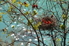 Autumn nest Royalty Free Stock Image
