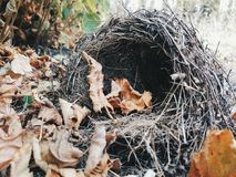Autumn nest 1 Stock Photo
