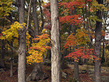 Autumn in New England Royalty Free Stock Image