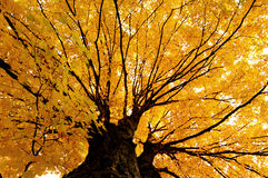 Autumn in New England stock images