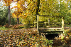 Autumn in the New Forest Royalty Free Stock Images
